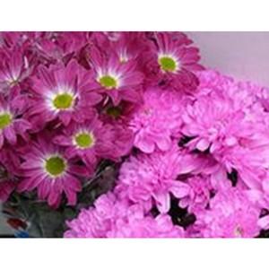 Об обнаружении калифорнийского цветочного трипса.