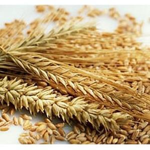 Вновь выявлены нарушения правил хранения зерна