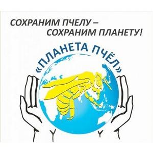 Благотворительный фонд построит в Санкт-Петербурге музей пчелы