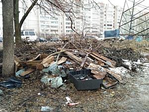 ОНФ: муниципалитетам и управляющим компаниям необходимо вывозить с улиц срезанные ветки деревьев