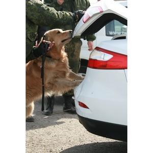 Таможни Сибирского региона возбудили более 50 уголовных дел благодаря работе служебных собак