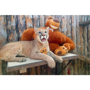 Инкубатор «Швабе» продолжает спасать животных в зоопарке Екатеринбурга