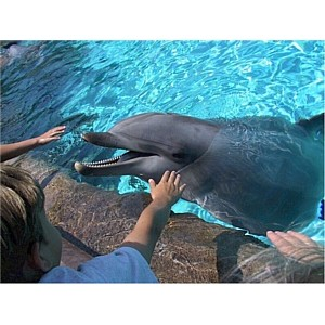 Воспитанники детского дома №2 г. Барнаула побывали на сеансе дельфинотерапии