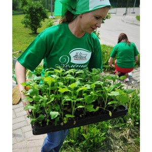 Сочи присоединился к экологическому проекту «Зеленые Команды» Coca-Cola Hellenic.