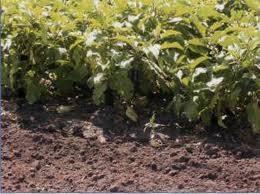 Превышение в почве подвижного марганца