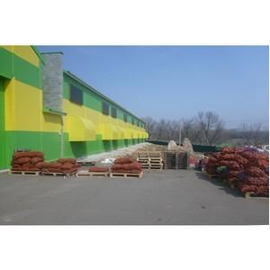 При поддержке Россельхозбанка в Белгородской области развивается производство картофеля