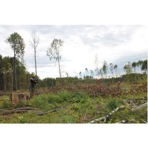 Активисты ОНФ выявили признаки нарушений лесного законодательства в Тарском районе Омской области