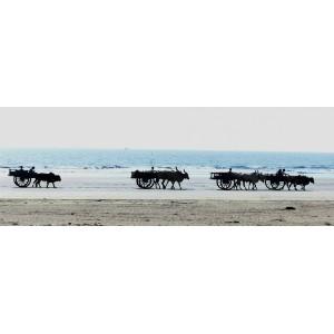 «Индия, далекая и близкая»