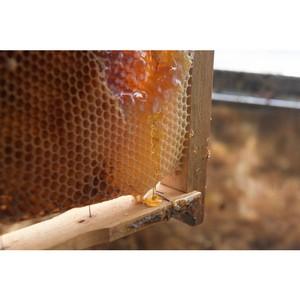 В целевую программу «Развитие пчеловодства в Алтайском крае» на 2017–2019 гг. вошли предложения ОНФ