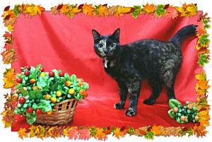 Общегородская кототерапия: выставка-пристройство осенних котов