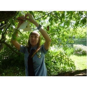 В садах Ярославской области размещены феромонные ловушки
