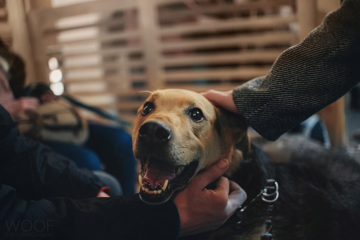 Фестиваль Woof в поддержку животных из приютов состоится 11 и 12 ноября 2017 г.