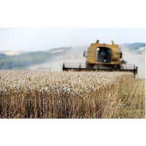 Мониторинг качества зерна в Новосибирской области