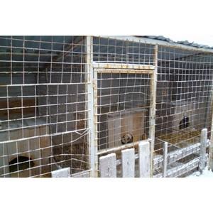 ОНФ провел мониторинг исполнения муниципальных контрактов на отлов бездомных животных в Ялуторовске