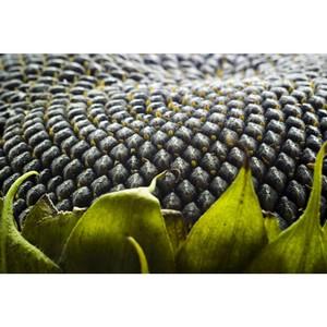 Управление Россельхознадзора контролируют соблюдение техрегламента «О безопасности зерна»