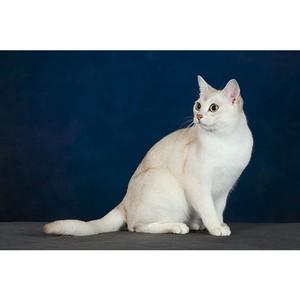 Информационному порталу о домашних животных «Хвост Ньюс» исполнился год