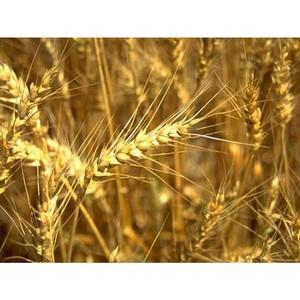 О результатах деятельности Томского Россельхознадзора в сфере семенного надзора за 2015 год