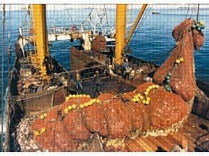 Нейминг от PR2B Group: Дальфлот ответит на санкции