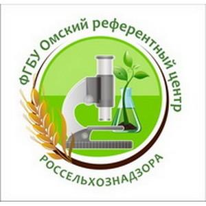 В Омске в кукурузе обнаружили карантинный сорняк