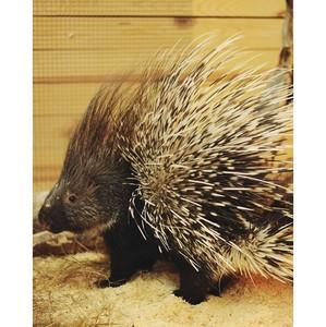 Путь знакомства с миром животных: зоопарк «Погладь Енота»