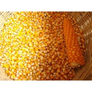 Об обнаружении в обороте зерна без декларации