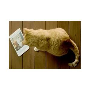 Говорящий кот от Циан