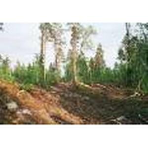 О повреждении защитного лесного насаждения