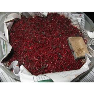 Управлением Россельхознадзора по Воронежской области задержано более 5 тонн охлажденного мотыля