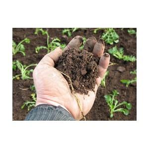 Об исследованиях почвы на содержание свинца