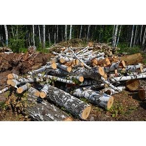 Челябинские активисты ОНФ занялись фактами вырубки леса в поселке Рощино
