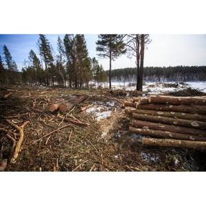 Тюменские активисты ОНФ поддержали идею саратовских экологов о проведении лесоустройства