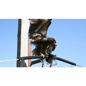 Энергетики будут защищать редких птиц