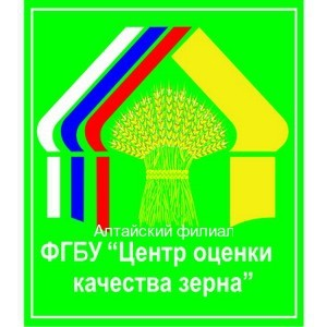 Об исследовании семян на всхожесть специалистами Алтайского филиала