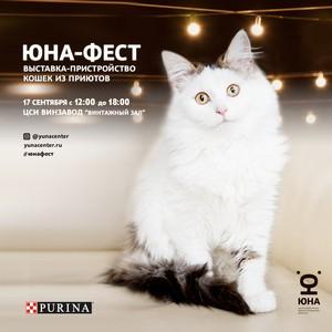 """Благотворительная выставка кошек """"Юна-Фест"""""""