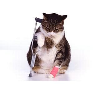Лечение переломов костей и хвостов у кошек и собак