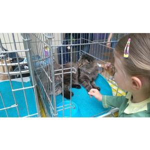 На форуме «Сообщество» активисты ОНФ рассказали о проектах в сфере содержания бездомных животных