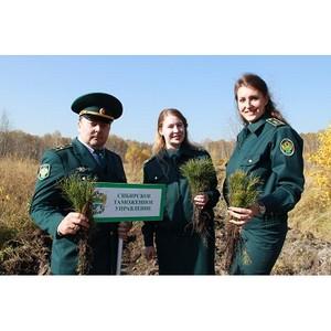 Сибирские таможенники восстанавливают лес