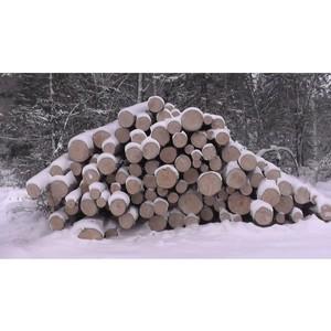 По сигналу ОНФ пресечена незаконная заготовка древесины в зоне заповедника «Кузнецкий Алатау»