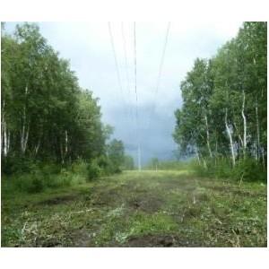 «Омскэнерго» расчистило просеки ЛЭП на территории 400 га