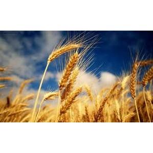 Чтобы уродился урожай, нужно правильно хранить семена