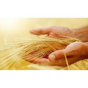 Нарушение правил хранения зерна