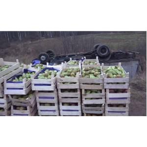 В Смоленской области задержали грузовики с запрещенными фруктами