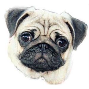 Порода собак - Мопсы