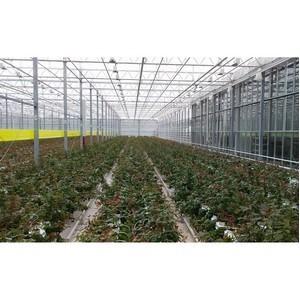 Центр компетенции сельхозкооперации и поддержки фермеров откроется в Приамурье