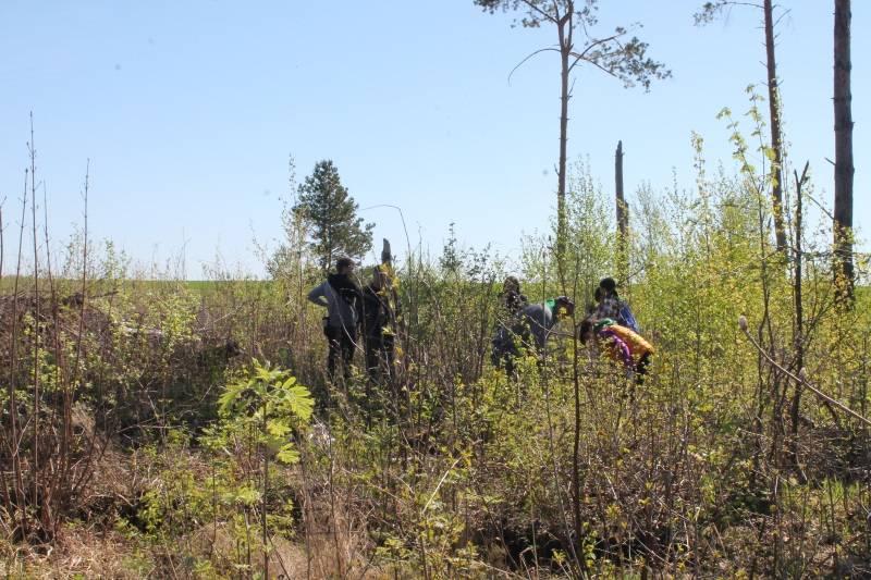 Активисты ОНФ в Мордовии высадили сосны в Рузаевском районе