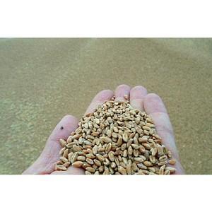 В сентябре через Ростовский речной порт на экспорт ушло около 271 тыс. тонн сельхозгрузов