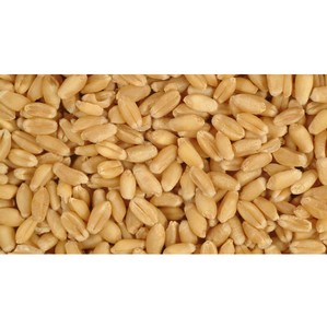 Общество хранило зерно в неподобающих условиях