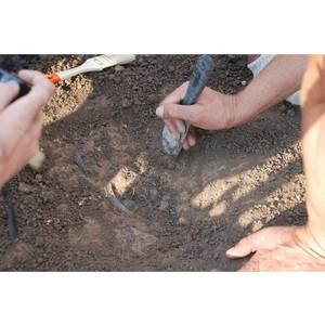 Приглашаем в археологическую экспедицию!
