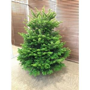 Все живые новогодние елки из «Звезд Арбата» отправились в Московский зоопарк