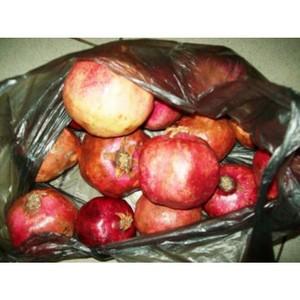 Предотвращен ввоз продукции высокого фитосанитарного риска